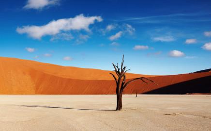 Tree in Dead Vlei