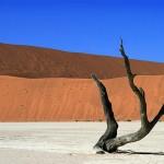 Baum im Dead Vlei