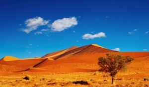 Dunes in the Namib