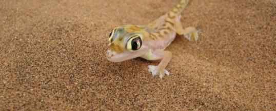 Animals in Sossusvlei