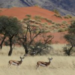 Namib-Rand-Nature-Reserve